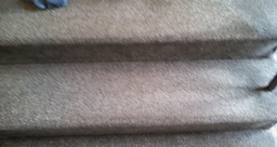 carpet cleaner springfield MA